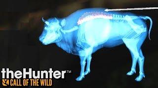 Powrót żubrów | theHunter: Call of the Wild (#22)