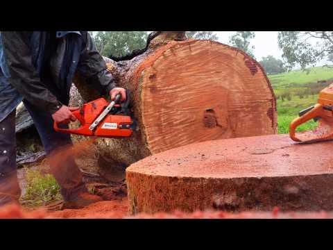 Husqvarna 365 sp VS Huztl 52mm Big Bore.