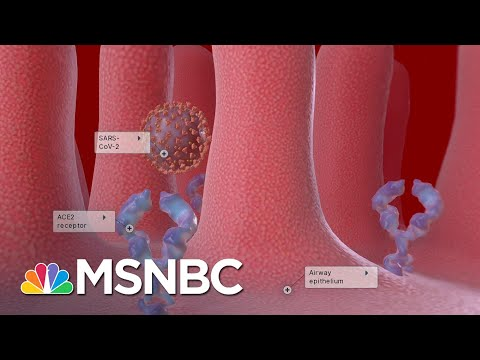 Researchers Hopeful A Coronavirus Vaccine Will Be Available Next Year   The Last Word   MSNBC