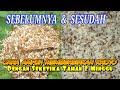 Cara Memisahkan Kroto Dari Semut Rangrang Hkbfpainan  Mp3 - Mp4 Download