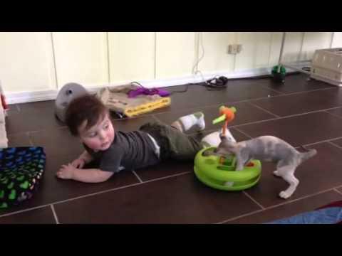 Devon Rex sharing her toy with Grandson