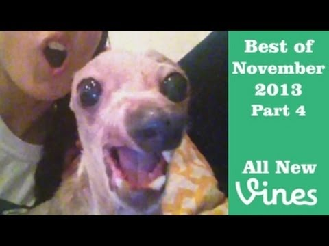 Best Vines of November 2013 - Compilation Part 4 (80 Total)