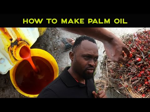 HOW TO MAKE PALM OIL #BestPolmOilProducer