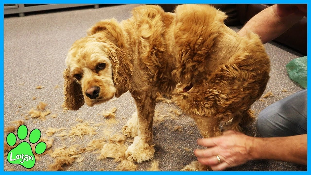 Kids React to Logans Haircut (Gone Wrong) / Logan The Adventure Dog