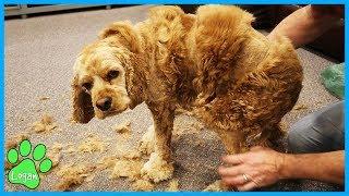 kids-react-to-logans-haircut-gone-wrong-logan-the-adventure-dog