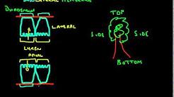 hqdefault - Basolateral Vs Apical Kidney