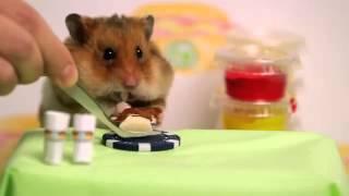 فأر صغير يفوز علي ياباني في مسابقة طعام