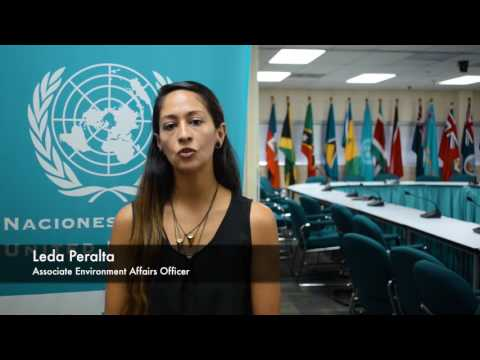 Young Professional's Programme Promo, Economic Commission for Latin America and the Caribbean