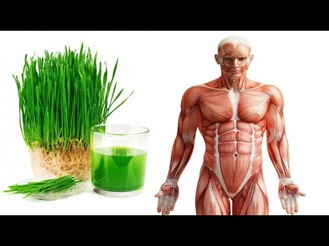 Just A Glass Of Wheatgrass Juice Every Morning And You'll Be Surprised With The Effect