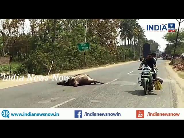 भागलपुर:भागलपुर व अमरपुर मुख्य मार्ग पर भैंस कटी, स्थानीय प्रशासन की उदासीनता देखने वाला कोई भी नहीं