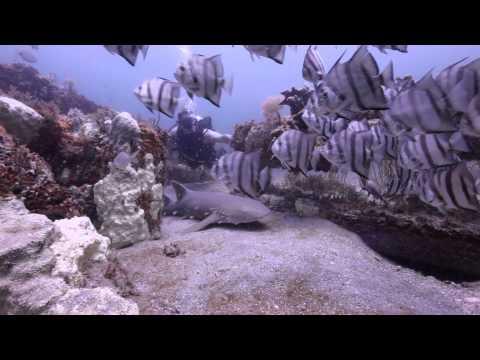 Jacksonville Scuba Diving Expert, Joe Kistel