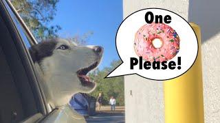 Meeka Orders Her OWN Donut! (SPEAKS PERFECT!) 😱😍🍩