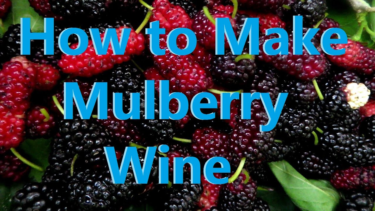 How to make mulberry wine  YouTube