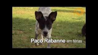 Paco Rabanne em férias no CTRC Núcleo Pet