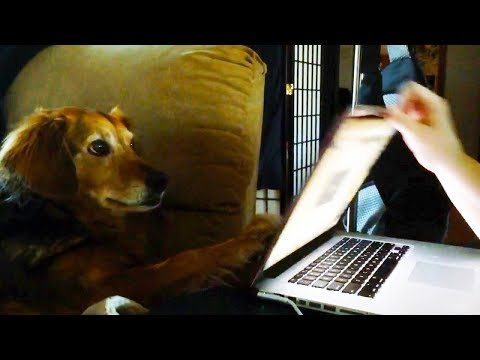 'Dogs Who Won't Let Their Humans Work Compilation' || CFS