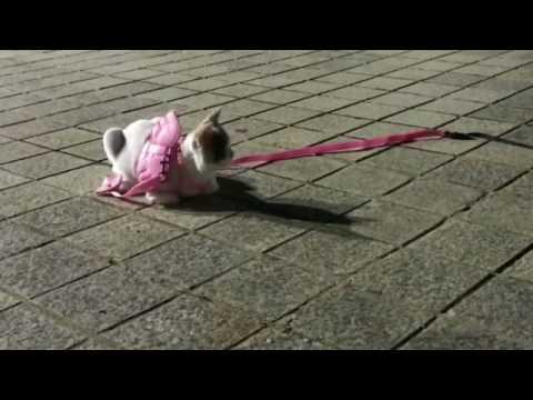 🐾  고양이(디올) 산책 4