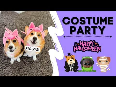 Dogs Attend Halloween PARTY! #shorts