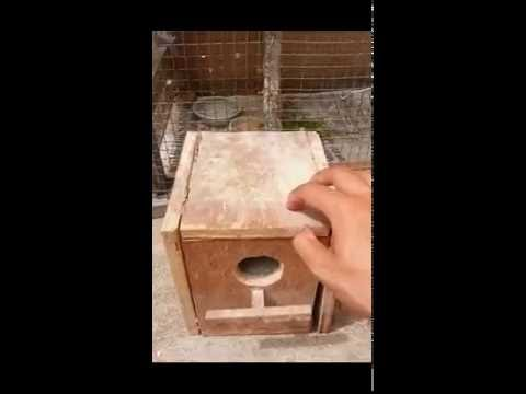 How to Make Budgie Breeding Nest Box: Best Budgie Breeding Box: Lovebirds Nest Breeding Box