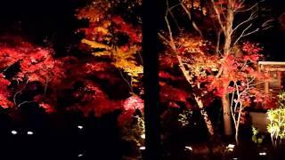 本土寺の紅葉 ライトアップ2010