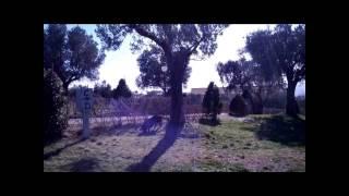 Raber Staffordshire Bull Terrier Jumping