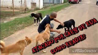 Como agir a ataque de cães durante o passeio com o seu Cão?
