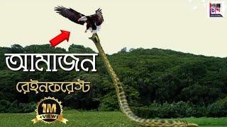 আমাজন বন || Amazon Rainforest Documentary || CHOKH