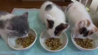 새끼고양이 밥먹이기