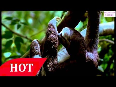 Strange Secrets In the Amazon RainForest National Geographic Documentary 2016 HD 2 HD