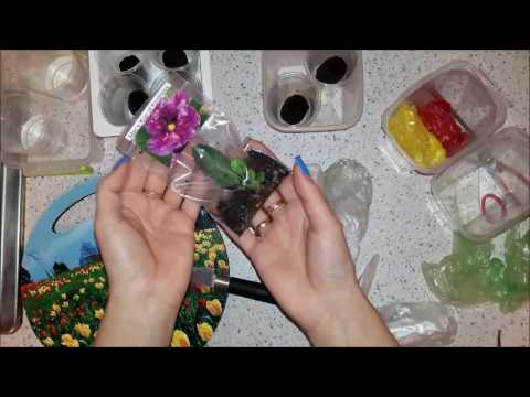 11. Распаковка растений и посадка листиков фиалок