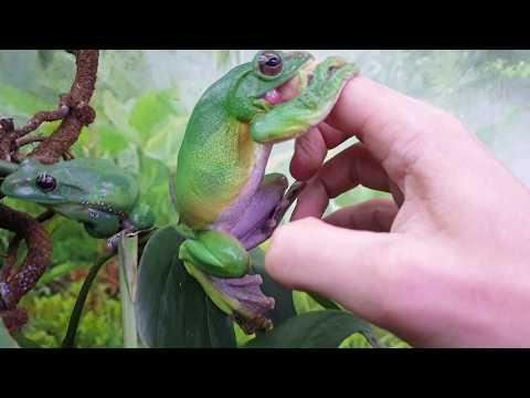 Гатилов измеряет глубину лягушки пальцем в рот. Билеты со скидками на Рептилиум!