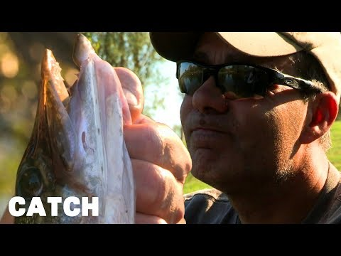 Catching 7 Different Species Of Fish In A Tiny Stretch Of Lake   24 Hour Road Race   Catch