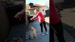 Кормлю собаку  Мажорку. Мое 1-е видео.