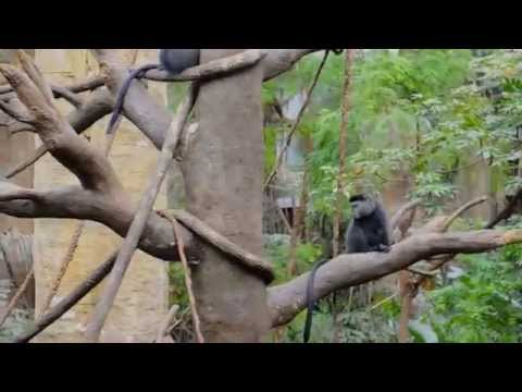 Henry Doorly Zoo, Lied Jungle, America's Largest Indoor Rainforest, Long Version, Omaha Nebraska