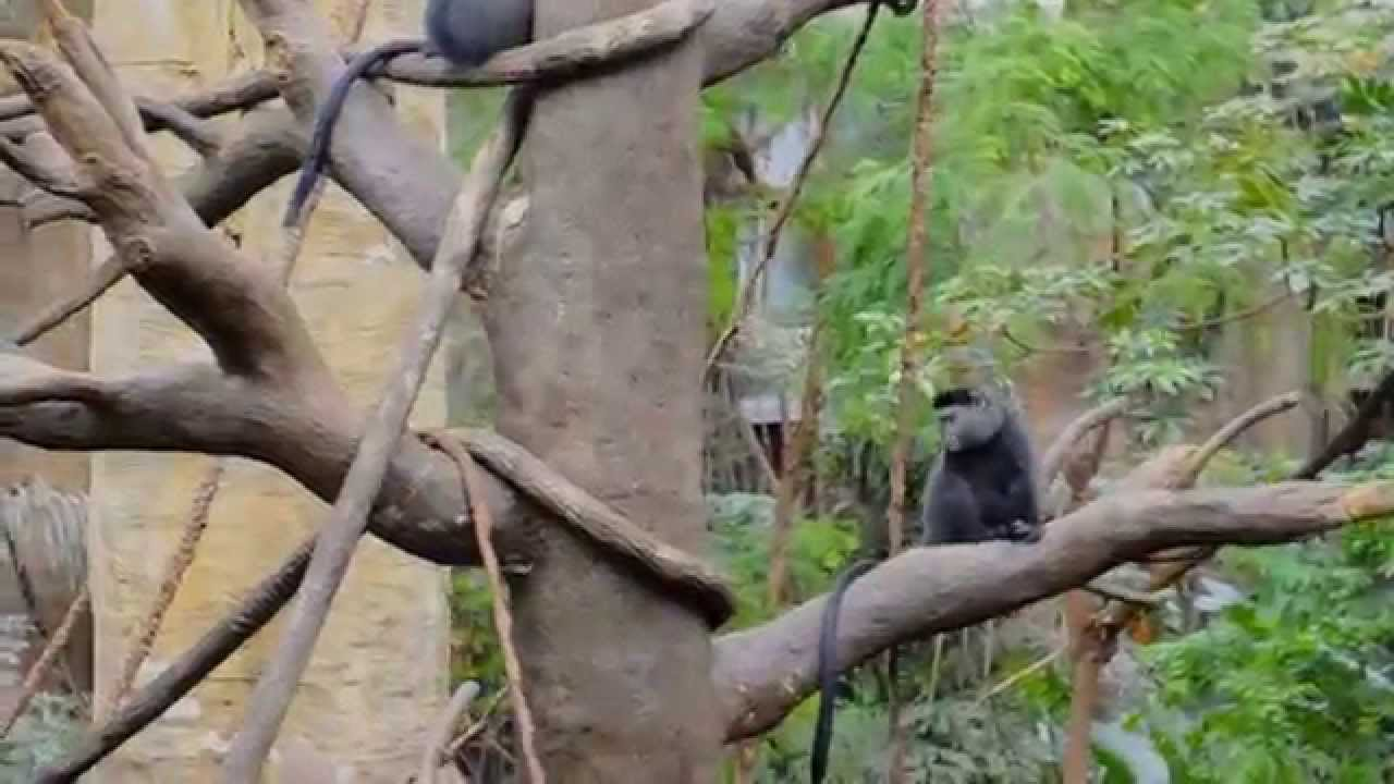 Henry Doorly Zoo Lied Jungle Americau0027s Largest Indoor Rainforest Long Version Omaha Nebraska - YouTube & Henry Doorly Zoo Lied Jungle Americau0027s Largest Indoor Rainforest ...