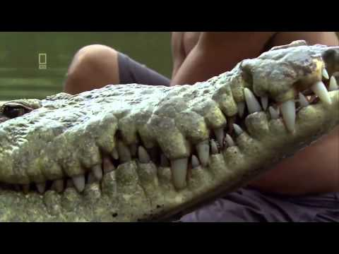 Herr der krokodile 2013 doku