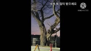대전 진잠 용바위 해맞이