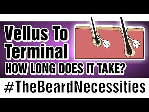 How Long Does It Take Vellus To Turn Terminal? | #TheBeardnecessities | Ep 22