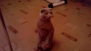 Кошка сидит на задних лапах