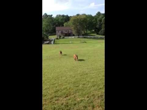 Bunnies And Leeloo On The Farm