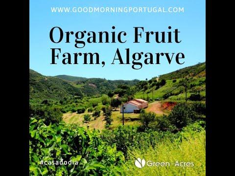 Portuguese Property: Organic Fruit Farm, Monchique, Algarve, Portugal