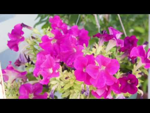 MyTerrace Garden  Dubai Dec 2016