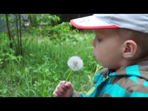 Одуванчик умный цветок