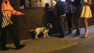 Police Drugs Dogs On The Streets Of Harrogate