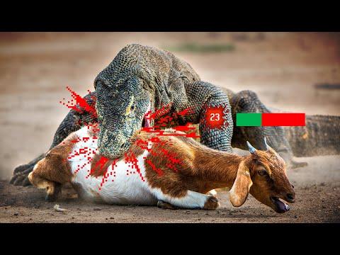 The Lizard Tier List