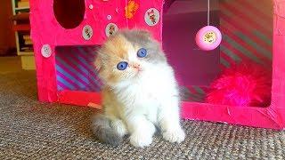 Реакция - подарили котенка! Сюрприз для Алис - маленький котенок // Самый милый котенок в мире