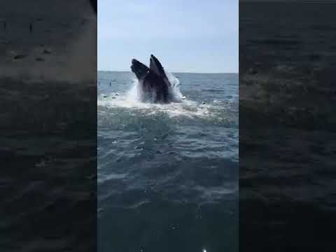 Whales were spotted off the coast of Long Island