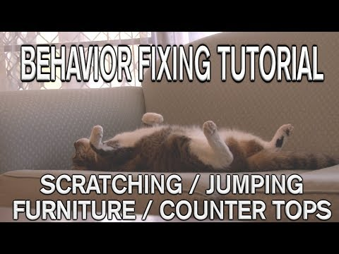 How to STOP scratching or jumping on furniture or counter tops
