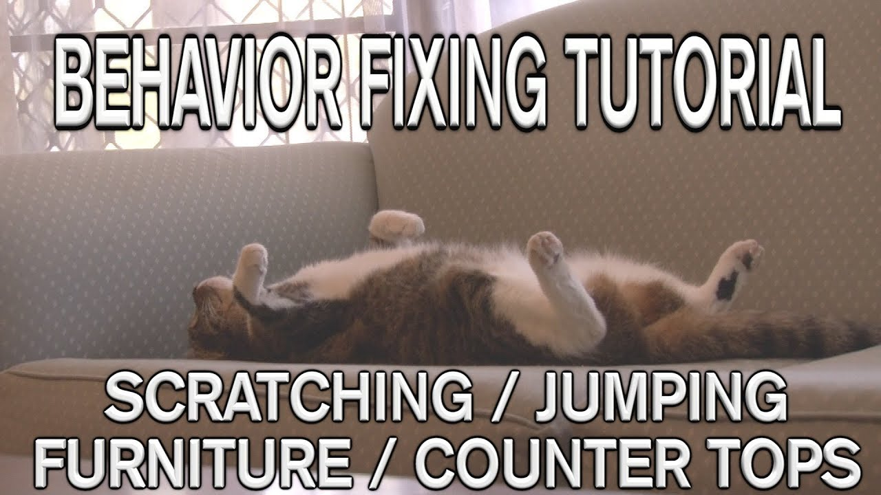your cat stop how keep scratching from cats furniture couch destroying to
