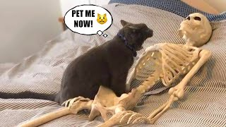 Funniest Animals  Best Of The 2021 Funny Animal Videos #62