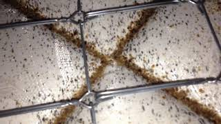 The most severe bed bug infestation in Normandy Beach